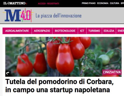 Tutela del pomodorino di Corbara, in campo una startup napoletana