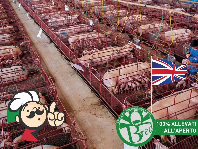 Gran Bretagna: le etichette sui prodotti di origine animale ingannano i consumatori