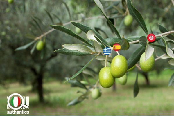 Allarme olio italiano authentico olive italiane olio extravergine