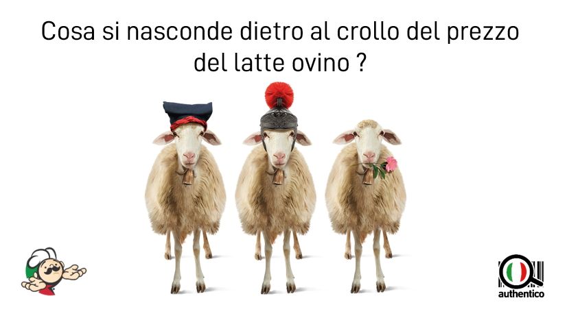 authentico pecorino sardo romano latte ovino pecora pastori sardi fiore sardo autentico