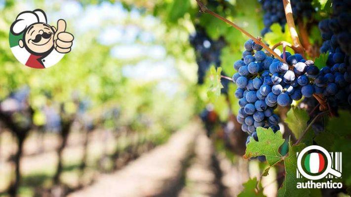 Vini campani: un viaggio nella tradizione enologica della regione