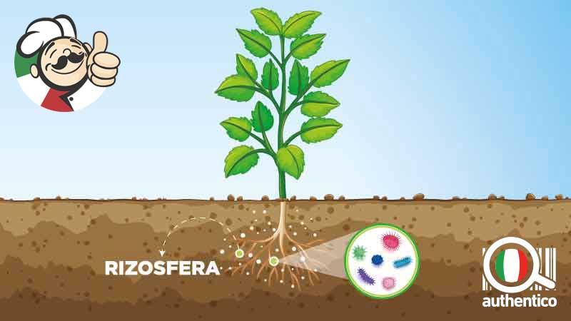 agricoltura simbiotica e sostenibilità