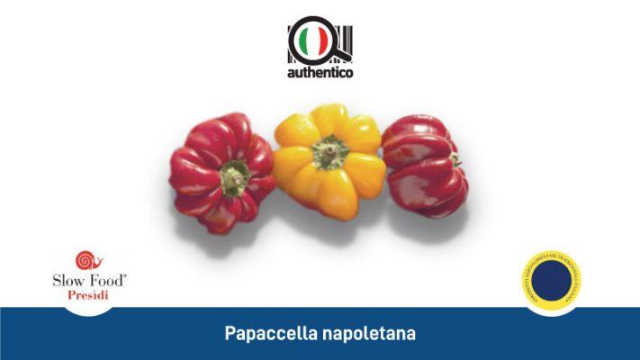 papaccella napoletana